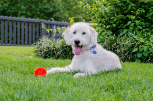 Dog Fencing Maryland